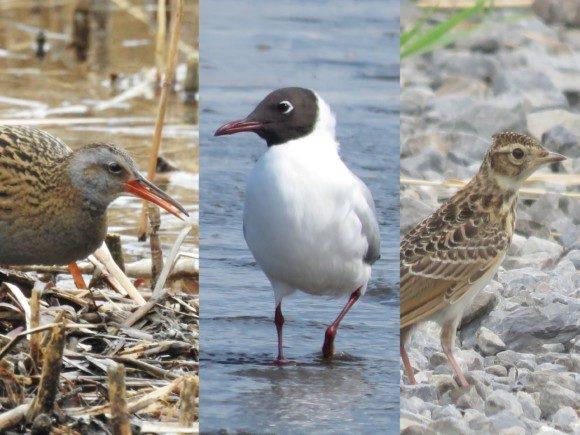 河川敷で見られる野鳥たち