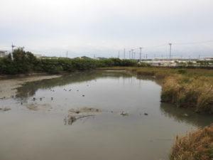 クロツラヘラサギの生息地 三角池