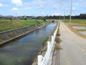 金武の田イモ畑 水路