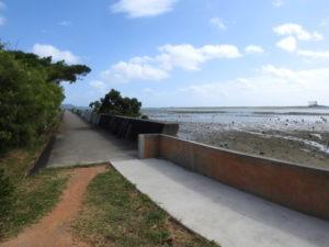 泡瀬干潟 堤防 野鳥