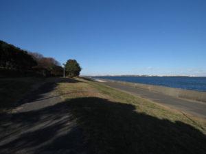 イソヒヨドリの生息地 若洲海浜公園