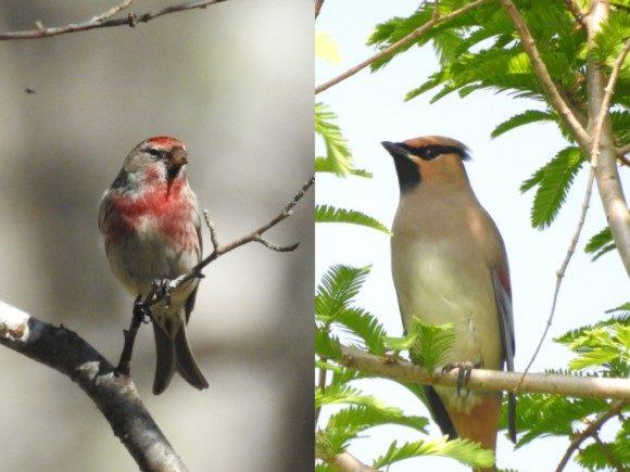 【北海道編】野鳥情報を発信している公式サイト・ブログ