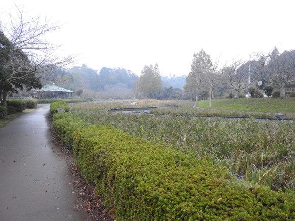 袖ヶ浦公園で見られる野鳥と観察ポイント