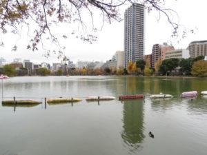 東京都 ツバメ 不忍池