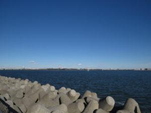若洲海浜公園で見られる野鳥 海上