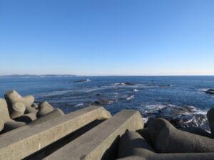 ミヤコドリの生息地 江ノ島