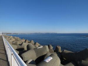 イソヒヨドリの生息地 江ノ島
