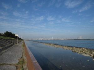 新木場緑道公園で見られる野鳥と観察ポイント 海上