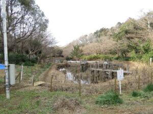 じゅん菜池緑地の野鳥 自然環境ゾーン