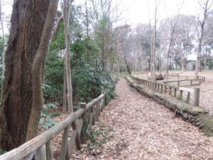 カケスの生息地 石神井公園