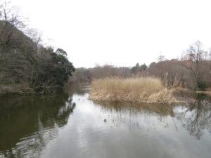 オオタカの生息地 石神井公園