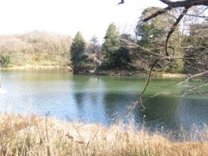 ガビチョウの生息地 三ッ池公園