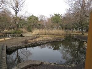 東京都 ワカケホンセイインコの生息地 石神井公園