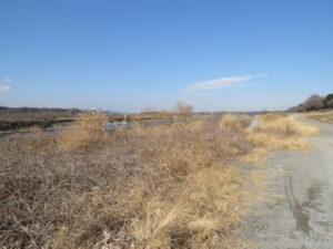 磯部頭首工で見られる野鳥と観察ポイント 河川敷