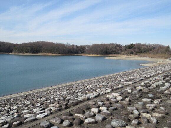 狭山湖で見られる野鳥と観察ポイント