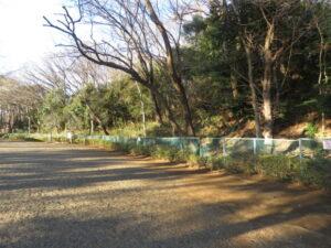 東京都 ワカケホンセイインコの生息地 多摩川台公園