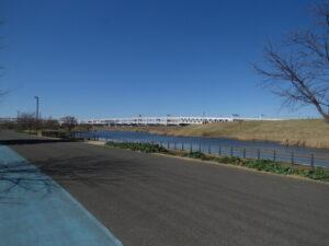 神奈川県のカワセミ 新横浜公園