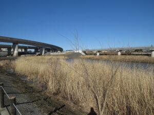 今田遊水地 ビオトープ北側