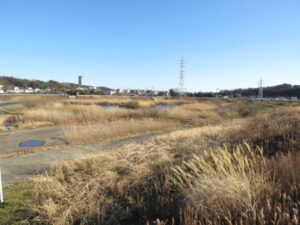バンの生息地 境川遊水地公園
