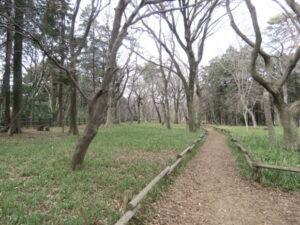 東京都 ワカケホンセイインコの生息地 井の頭恩賜公園
