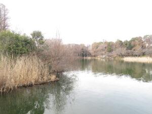 ゴイサギの生息地 井の頭恩賜公園
