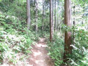 高尾山で見られる野鳥 5号路