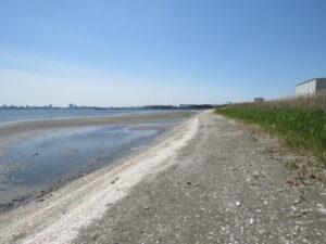 メダイチドリの生息地 ふなばし三番瀬海浜公園