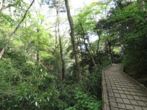 高尾山の野鳥 3号路