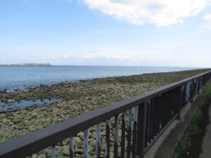 コアジサシの生息地 新木場緑道公園