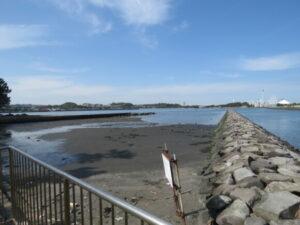 野島公園の野鳥 野島海岸 野島水路