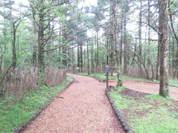 水ヶ塚公園で見られる野鳥と観察ポイント