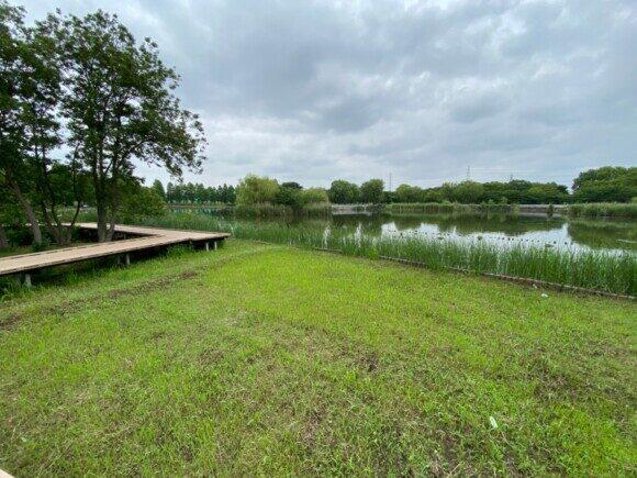 舎人公園で見られる野鳥と観察ポイント