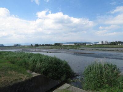 キアシシギの生息地 酒匂川河口周辺