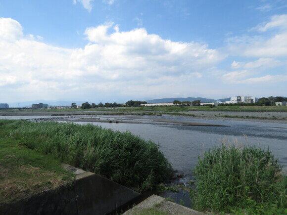 酒匂川河口周辺で見られる野鳥と観察ポイント