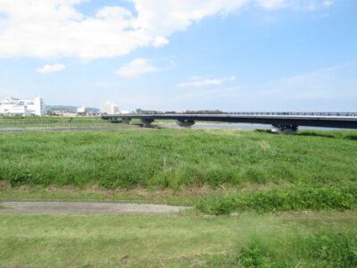 セッカの生息地 酒匂川河口周辺