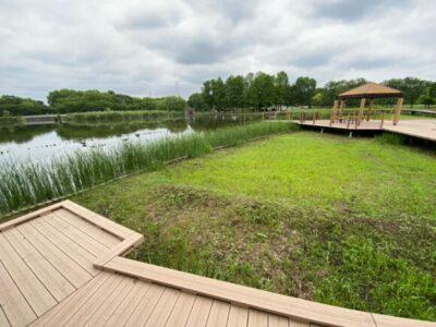 舎人公園の野鳥 大池