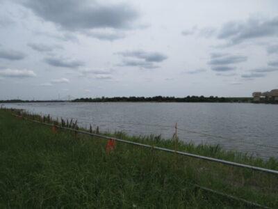 チョウゲンボウの生息地 彩湖