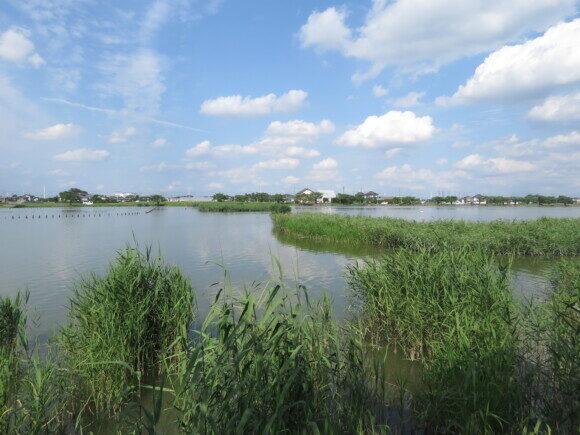 伊佐沼で見られる野鳥と観察ポイント