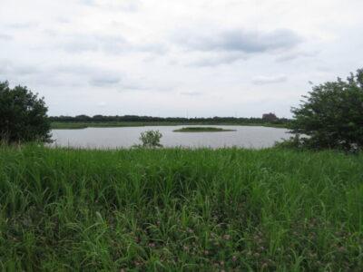 セッカの生息地 芝川第一調節池