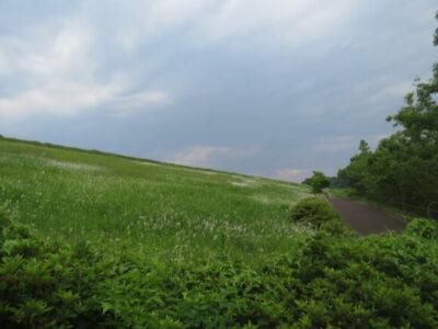 狭山湖の野鳥 堤防