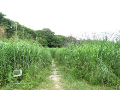 彩湖の野鳥 戸田ヶ原自然再生エリア