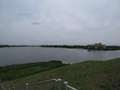 セッカの生息地 彩湖
