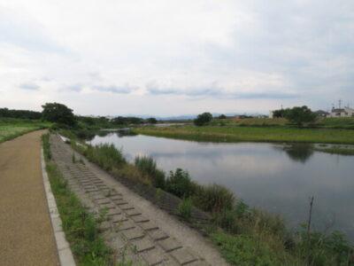 オオヨシキリの生息地 入間川中流域