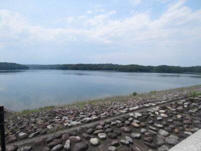タヒバリの生息地 狭山湖