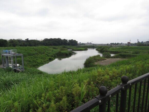 境川遊水地で見られる野鳥と観察ポイント