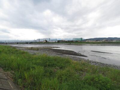 コシアカツバメの生息地 酒匂川河口周辺