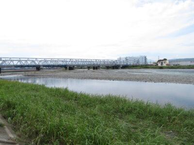 イソヒヨドリの生息地 酒匂川河口周辺