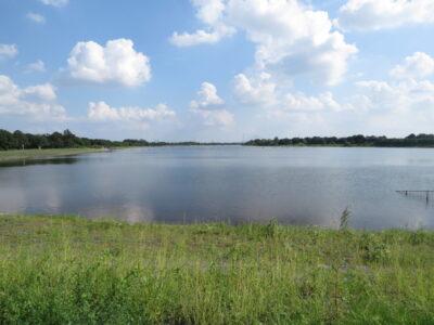 アリスイの生息地 彩湖