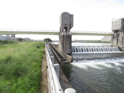 神奈川県 カワセミ 二ヶ領宿河原堰