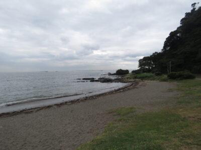 観音崎公園で見られる野鳥と観察ポイント 海岸沿い